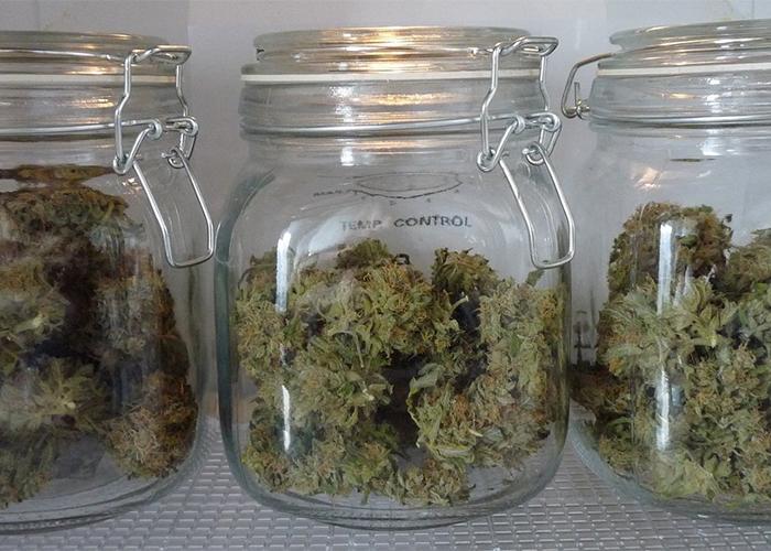 Сушка и пролечка марихуаны ответственность за продажу марихуаны