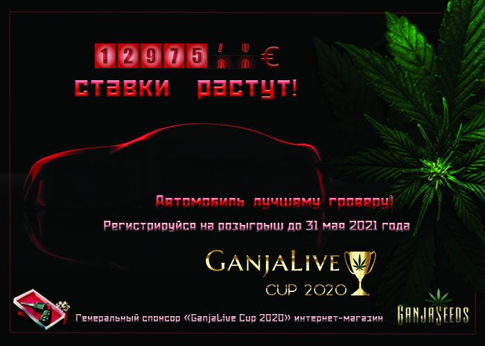 Как не прозевать победу и заполучить авто на «GanjaLive Cup 2020»