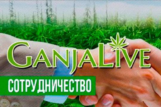 Сотрудничество с GanjaLiveSeeds