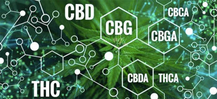 Так что же лучше: THC, CBN или CBD?