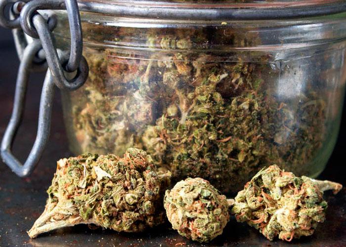 Сбор, сушка и пролечка марихуаны