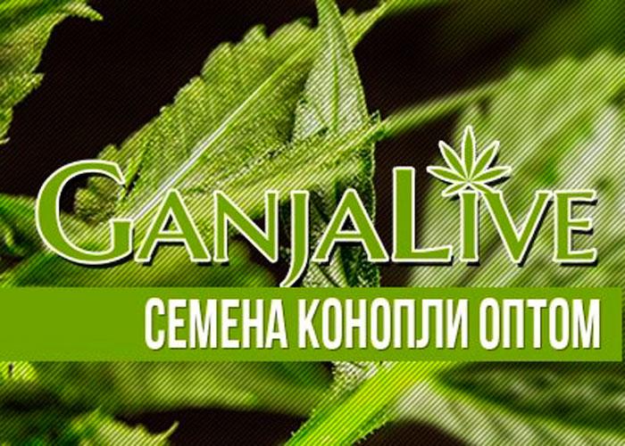 Семена конопли оптом - GanjaSeedsGroup