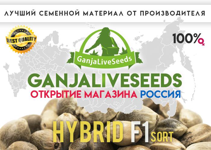 GanjaLiveSeeds теперь и в России!