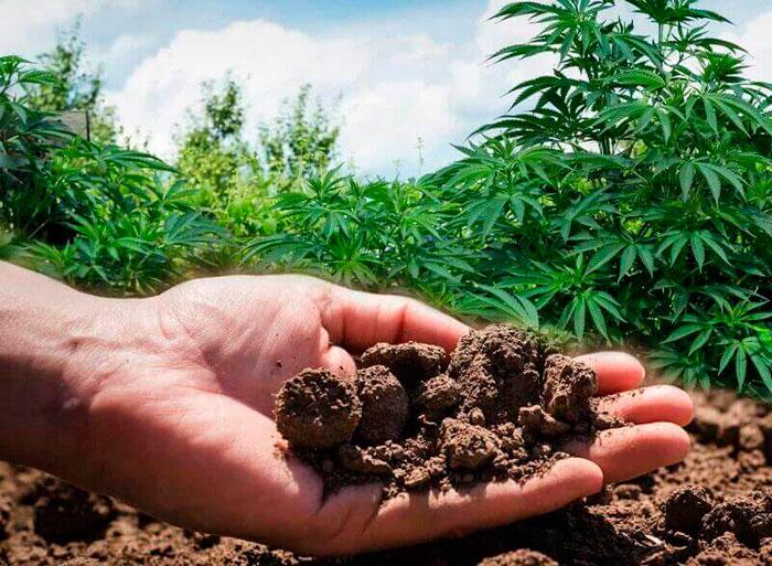 Как выбрать и подготовить правильную почву?