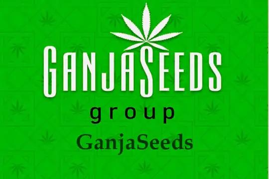 Оптовые цены на семена конопли GanjaSeeds