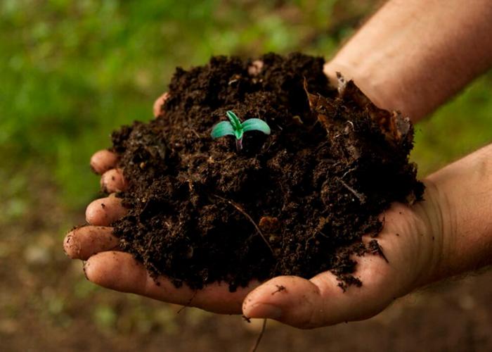Органический метод выращивания