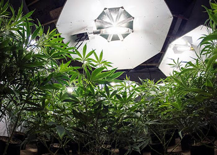Indoor – выращивание в домашней оранжерее