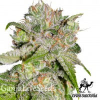 Auto Sweet Tooth feminised Green Silk Road Seeds